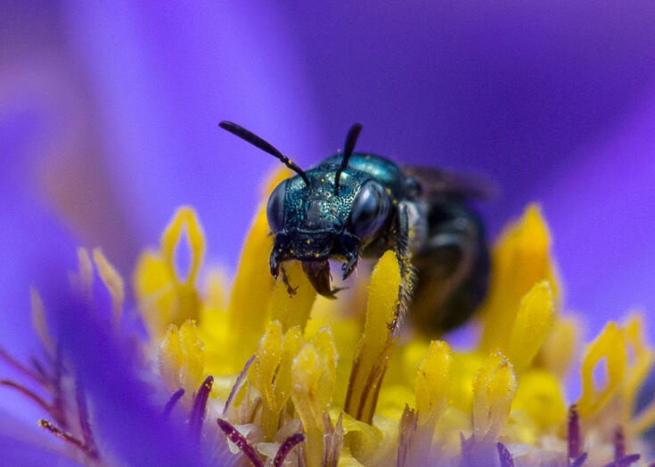 a small carpenter bee